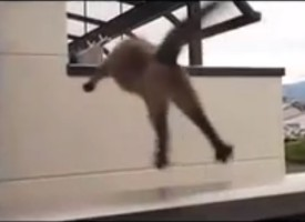 Massive Failed Cat Jump