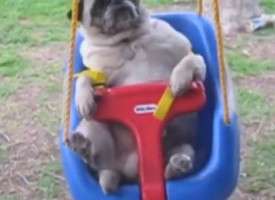 We Dare You Not To Laugh – Hilarious And Cute Animals