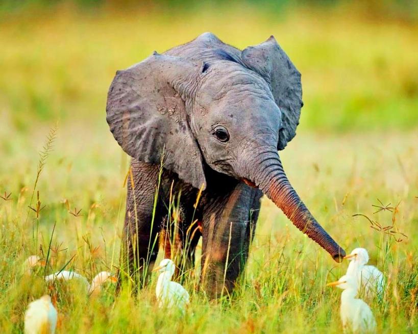KWN  - World's Cutest Baby Animals 3