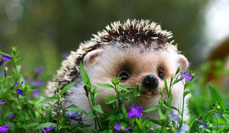 KWN  - World's Cutest Baby Animals 8