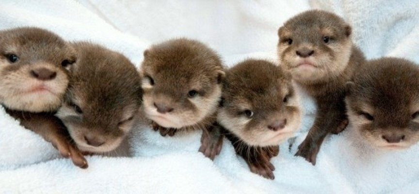 Twelve Of The Cutest Baby Animals On Earth