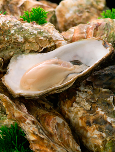 oysters_vss