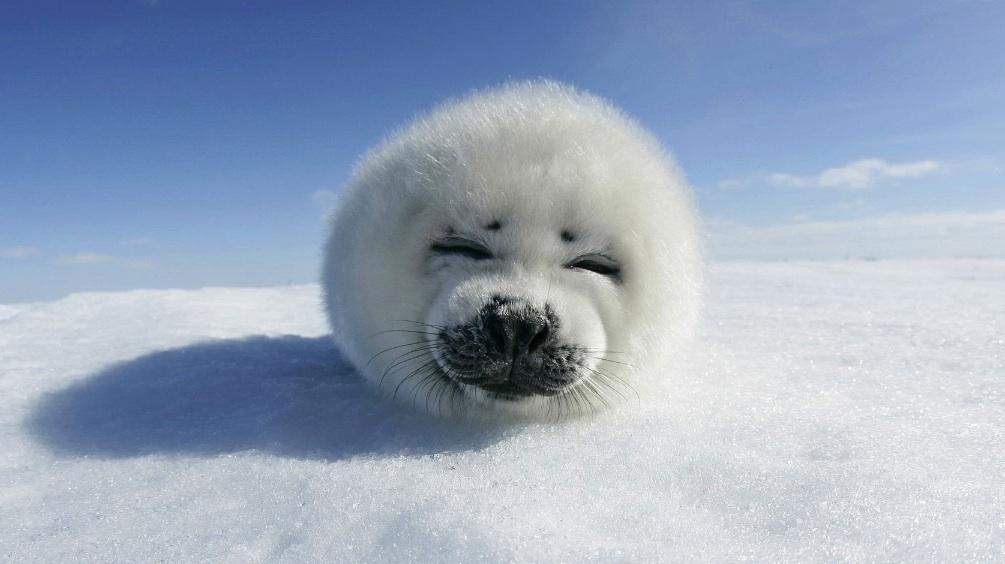 KWN  - World's Cutest Baby Animals 2