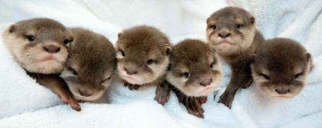 Twelve Of The Cutest Baby Animals On Earth King World News